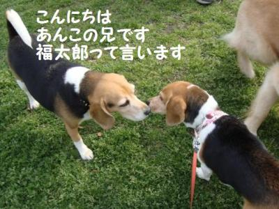 ビー 6 福ちゃん