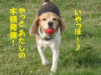 笑顔 13 ボール!