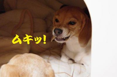 経緯 3 ムキッ!