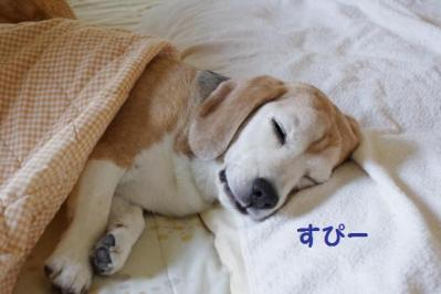 夢 2 爺 お寝む