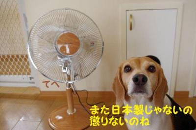 アダルト 6 扇風機