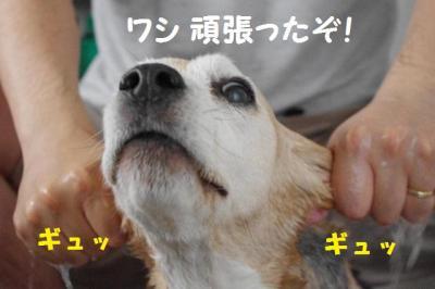 顔シャ 6 がんばった!