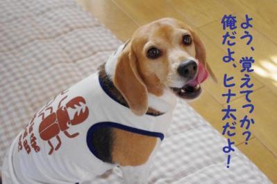 色気 3 ヒナ太