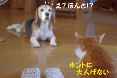 大馬鹿 3 ホントか!?