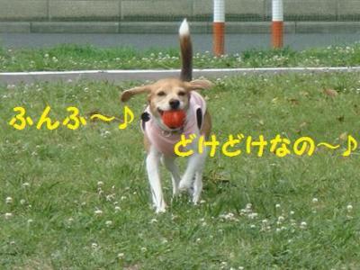イタグレ兄妹 1 ふんふ~
