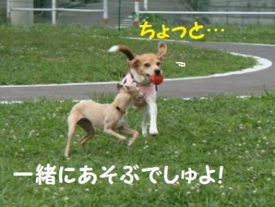 イタグレ兄妹 3 あちょびまちょ!