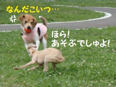 イタグレ兄妹 5 あちょびまちょ!!