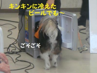 聴導犬 5 冷蔵庫