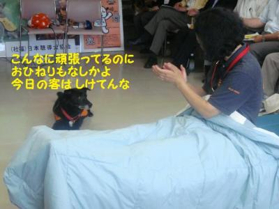 聴導犬 12 警報機