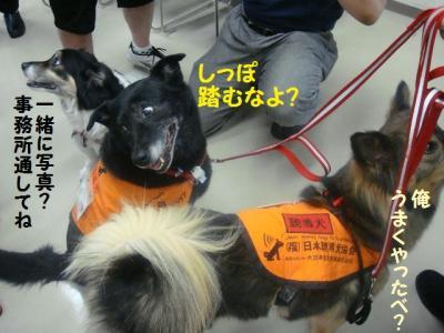 聴導犬 14 エリート三人衆