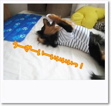 [photo22005327]090721-5