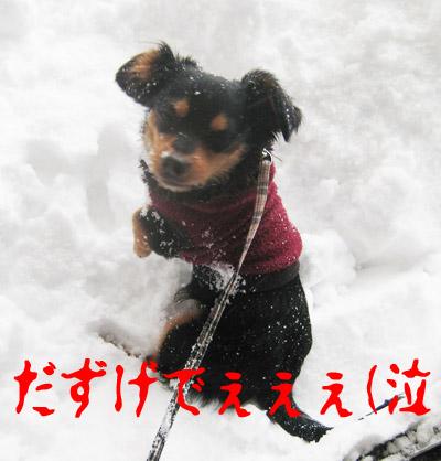 kotetsu-1.jpg