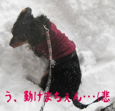kotetsu-2.jpg