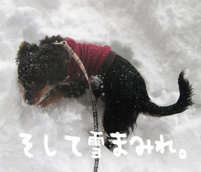 kotetsu-3.jpg