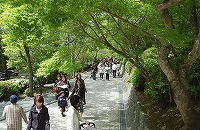hattasan-090426-2.jpg