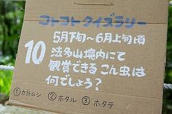 koto5-quiz-3.jpg