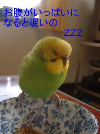 hatu2.jpg
