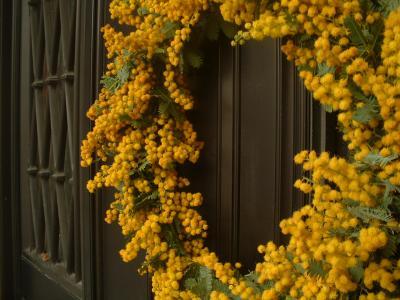 mimoza3.jpg