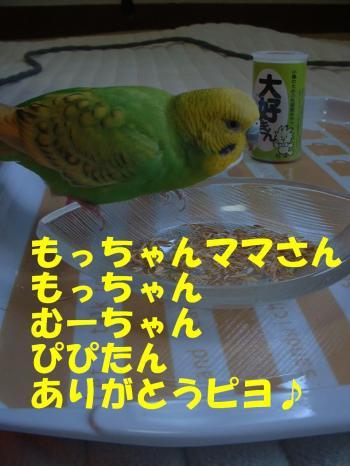 mocchan3.jpg