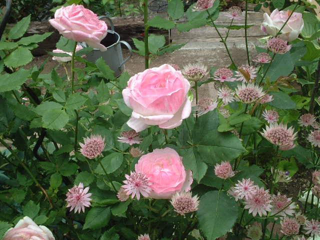 Sさんの庭08_06