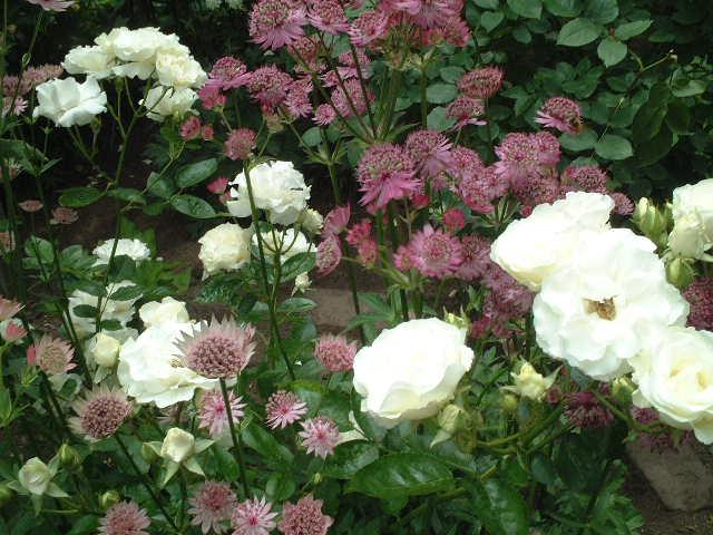 Sさんの庭08_06#2