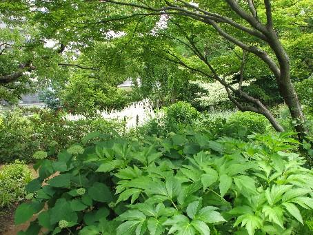 ガーデンフィールズ#8