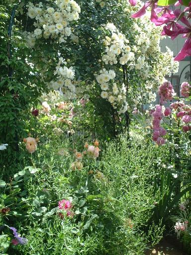 岩手09_06バラの庭