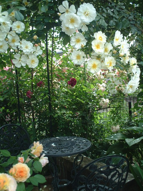 Sさんの庭#4