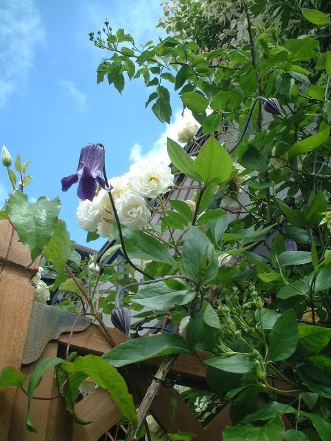 Sさんの庭#3