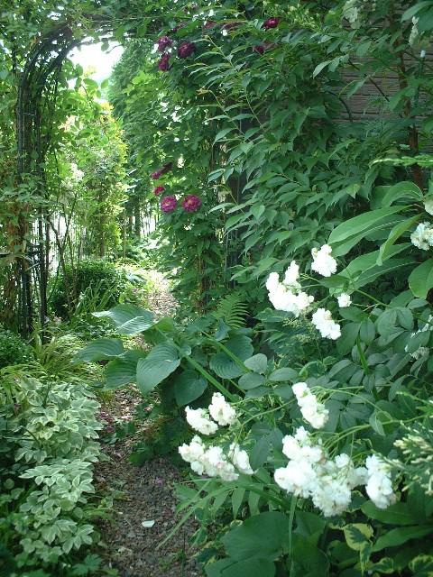 Sさんの庭#5