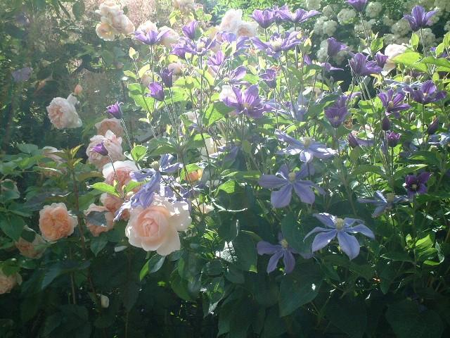Sさんの庭