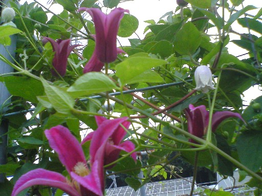 つくば植物園0906#3