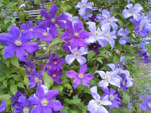 つくば植物園0906#2