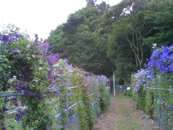 つくば植物園0906#5