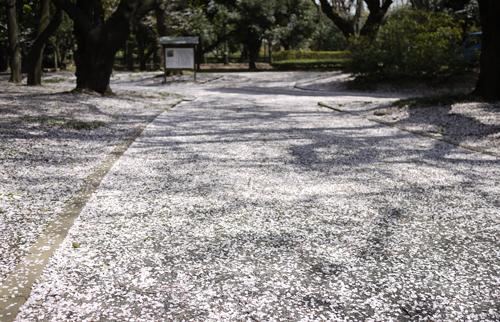 2010散り桜