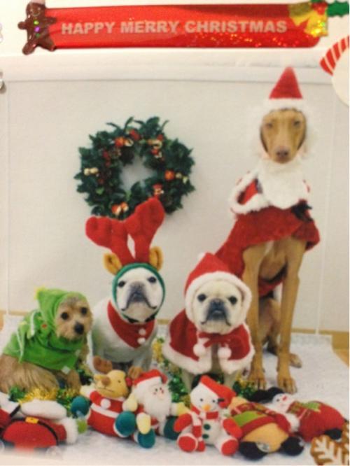 クリスマス集合写真