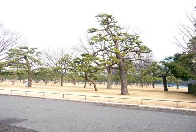 東京ぶらりひとり旅018皇居前広場の松林