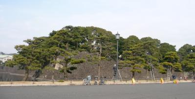 2010.2.19-東京ぶらりひとり旅024松林の剪定