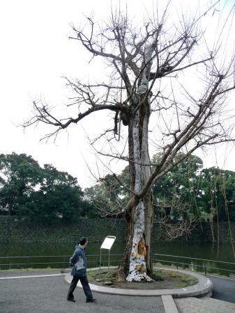 2010.2.19-東京ぶらりひとり旅029大手濠緑地の震災銀杏