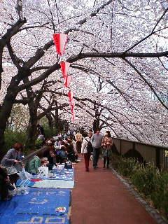 よく 2009桜2