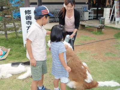 セラピー犬