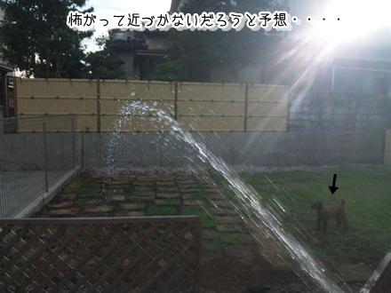 007_20110713224322.jpg