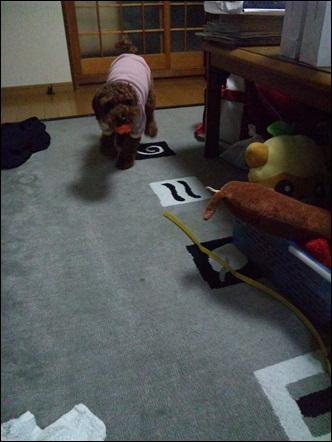 009_20110321000739.jpg
