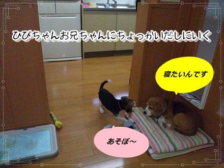020_20110426232244.jpg