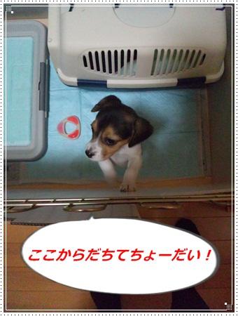 023_20110301234928.jpg