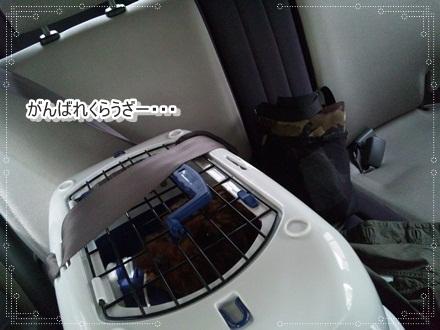 036_20110407233817.jpg