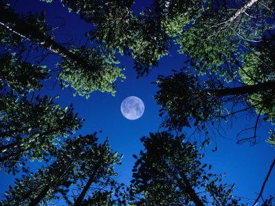 Full-Moon-.jpg