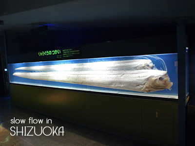 1004shizuoka16
