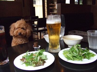 Cafe-Dinner S' (カフェダイナシー) サラダ&ビール