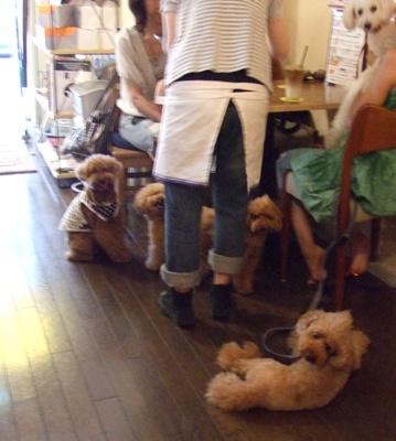 SHOTO CAFE(ショートーカフェ)店内